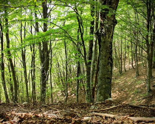800px-Particolare_della_foresta_di_faggi_-_Parco_Naturale_dei_Monti_Aurunci